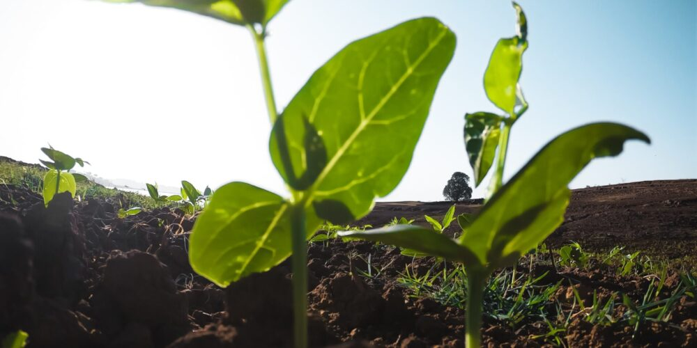 agriculture-cultivation-green-2218364